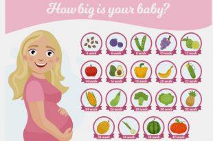 مقارنة حجم الطفل بحجم الفواكه والخضروات - أسبوع بعد أسبوع