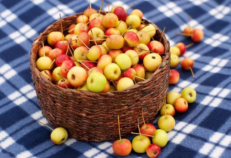التفاح البري (كابابل)