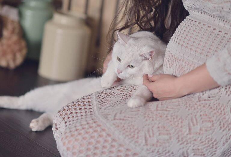 تجنبي القطط