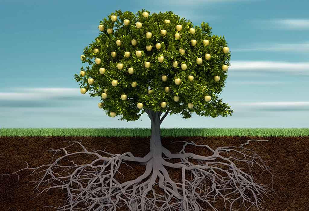 شجرة الإبر