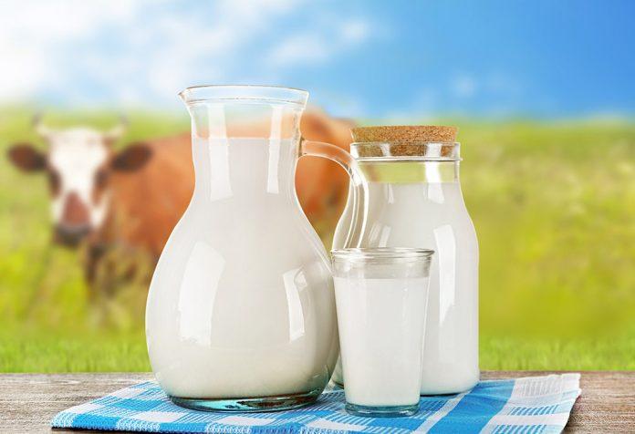 حليب البقر